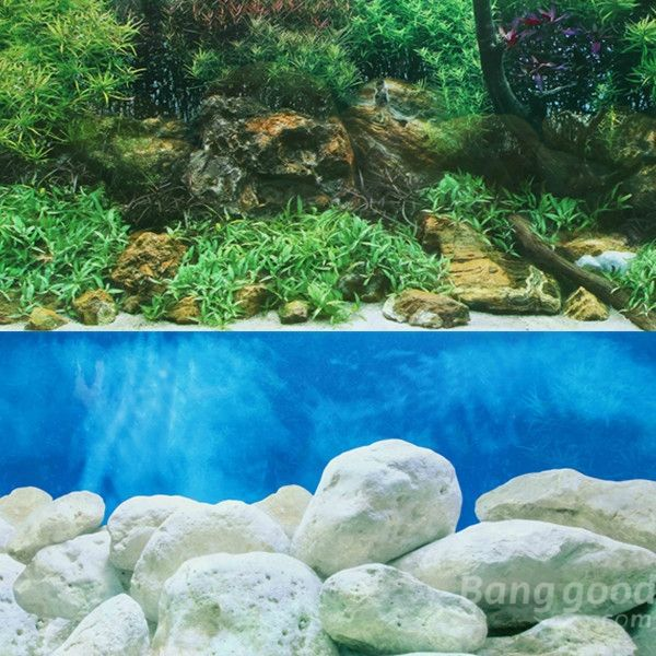 High quality double sided aquarium landscape poster fish Aquarium landscape