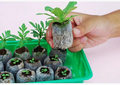 Free shipping 30pcs 25mm jify peat Planting cutting garden supplies seed starter vegetable seeds pellete new