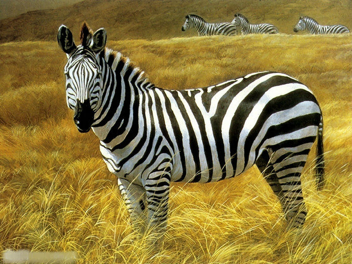 136 zebra-stripe For TheLand Rover Defender (2)