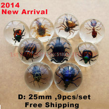 Real Insects Clear Resin Ball Marble 9 Kinds Insect Collection Specimen Bug Sphere Cool Boy Gift 25mm Diameter Birthday Present(China (Mainland))