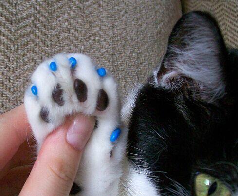 free shipping 20 pcs lot pet cat finger grooming floor