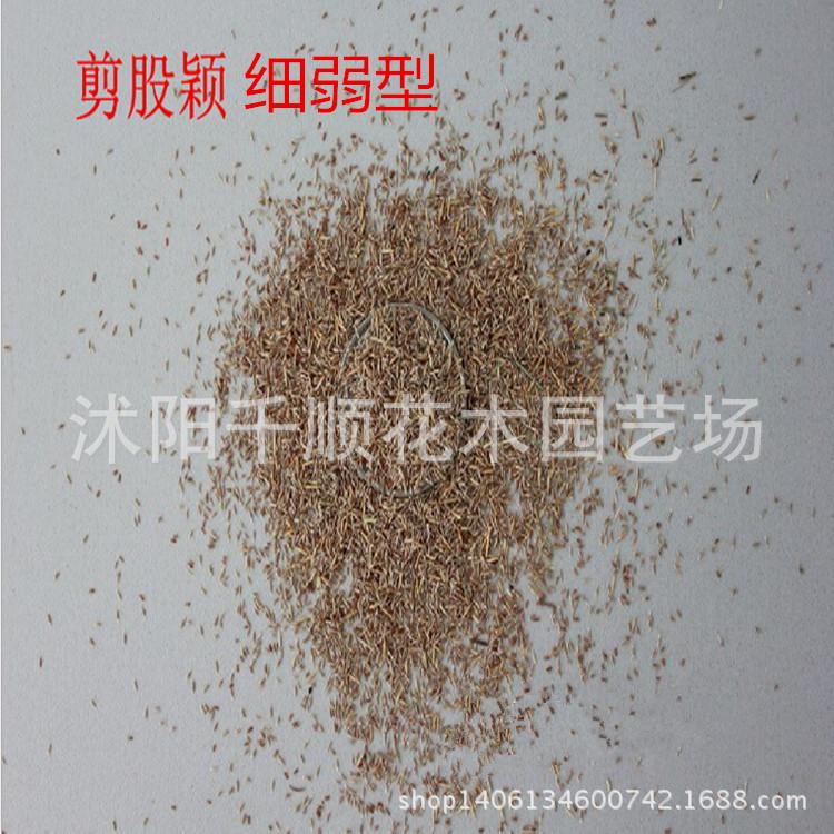 Semences de gazon promotion achetez des semences de gazon for Temps de germination gazon