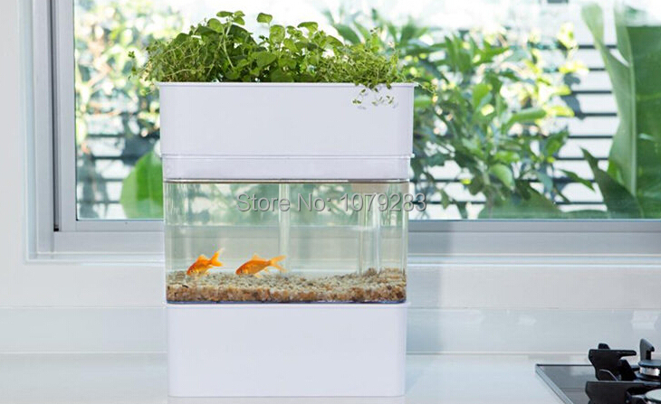 Compare prices on aquaponics fish tank online shopping for Fish tank price