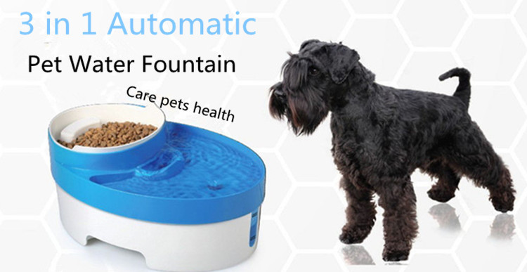 Activated Charcoal For Dogs Pet Food Express