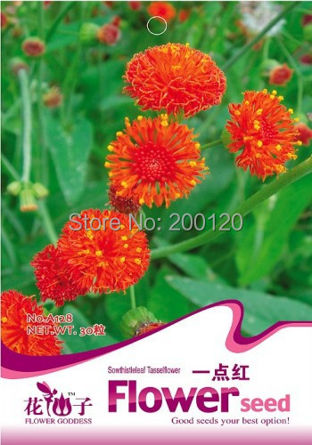 tassel blower ,emilia sonchifolia,Sowthistle Tasselflower Herb ,a pack of 30 seed of free shipping for coutyard(China (Mainland))