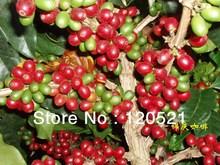 Organi ccoffee beans Yunnan Arabica Chinese Mandheling AA 1 pounds 454g
