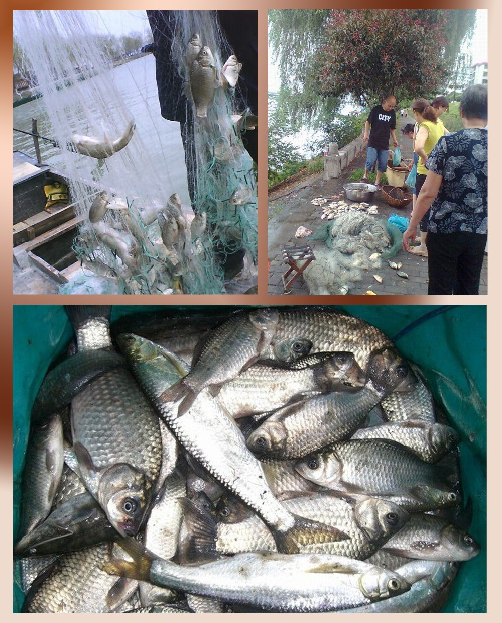 2015 New style Hot Sale 30m to 50m Monofilament Gill Fishing Net Fish Net with Float(China (Mainland))