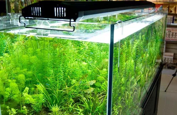 "odyssea 4 tubes T5HO lighting with leds, 24"" 60cm Quad Aquarium Lighting 4X24W 6500k for plant aquarium(China (Mainland))"