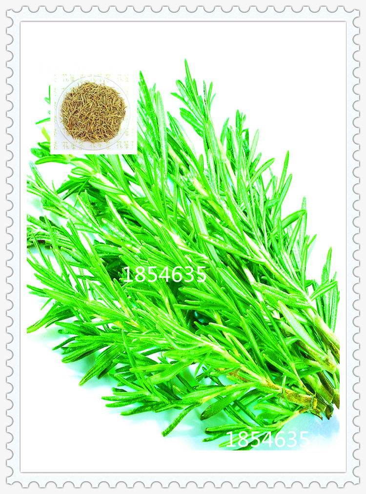 200 Rosemary Seeds DIY Garden Plant Easy To Grow Herb, vegetable seeds healthy,Free Shipping(China (Mainland))