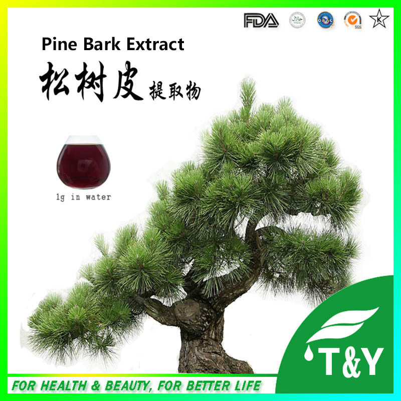 OPC Pine Bark Extract,Proanthocyanidins Pine Bark Extract,Pine Bark Extract 95% OPC 500g 20:1