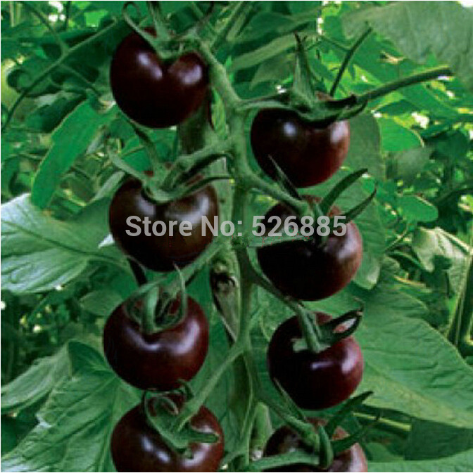 Black Pearl tomato seeds fruit tomato seeds non GMO 20 Seed particles