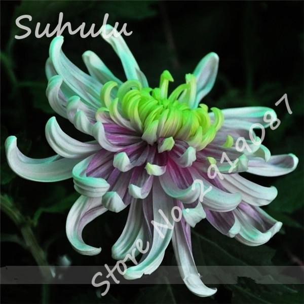 Acquista all 39 ingrosso online vaso di fiori blu da for Vendita semi fiori