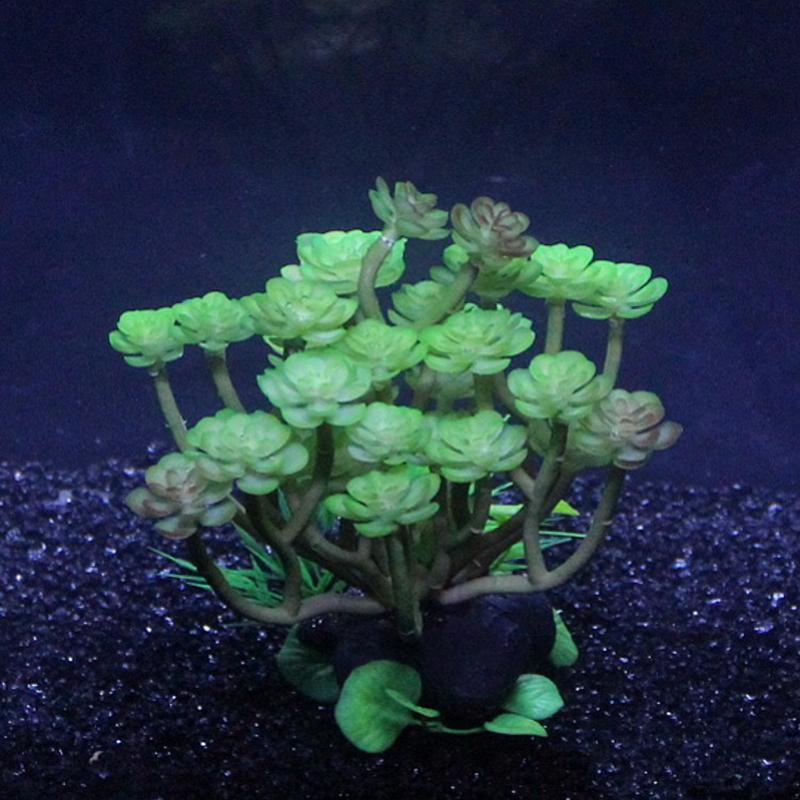 tortue aquarium plantes en Ligne ? des Grossistes tortue aquarium ...