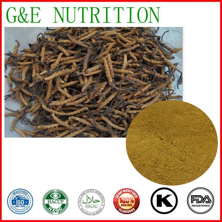 100% Natural 10:1 Brown Powder Cordyceps  Sinensis Extract 300g<br><br>Aliexpress