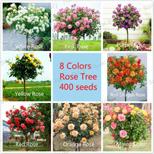 8 Colors Chinese Rose Tree Seeds,  popular variety ideal DIY Home bonsai  flower, each 20 seeds ,160 seeds at all ,free shipping