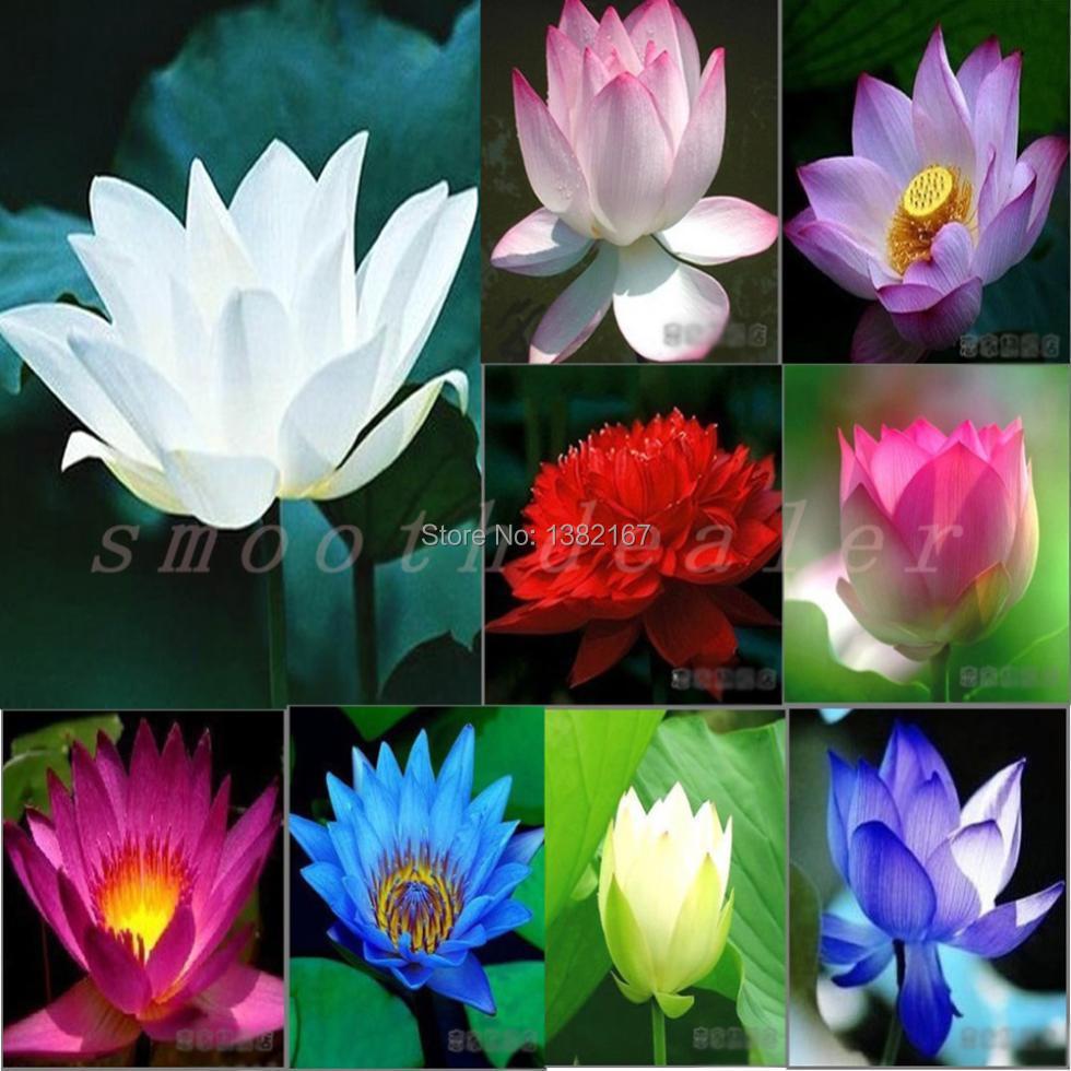 2014 Real Very Easy Sementes Sementes De Flores High Quality 100% Original 10pcs Mix color Aquarium Plant Seeds free Shipping(China (Mainland))