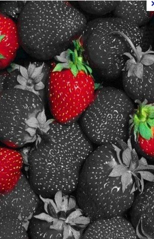 free shipping 30pcs/lot hot selling black strawberry seeds for DIY home garden