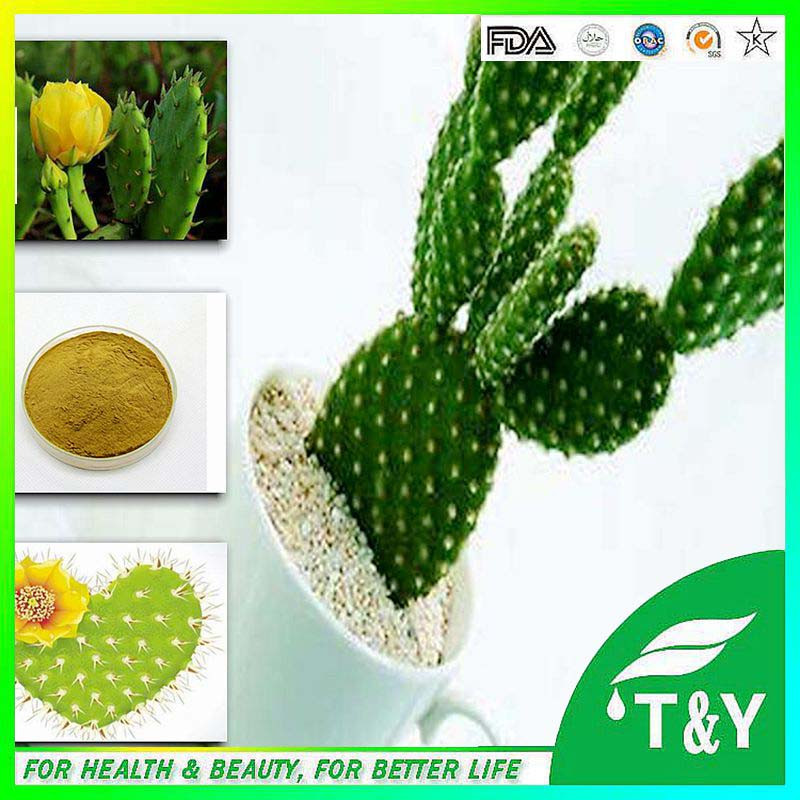 China factory supply natural Cactus Extract<br><br>Aliexpress