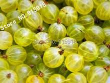 Fruit seeds 10pcs Ceylon Gooseberry seeds*RARE*showy*KIDS DIY home gardening