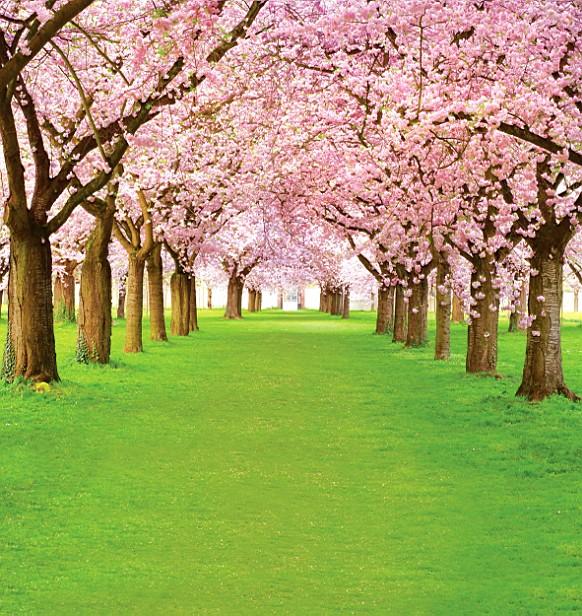 Здесь можно купить  600CM*300CM fundo Woods meadow flowers3D baby photography backdrop background LK 2045  Бытовая электроника