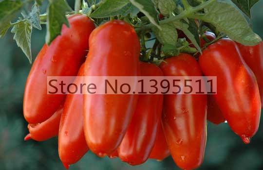 Гаджет  100/bag Tomato Seeds -San Marzano tomato, Heirloom Open Pollinated Tomato Seeds  vegetable seeds for home planting None Дом и Сад