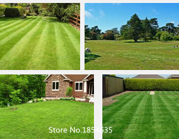 Garden Plant Lawn Turf Seed 500pcs Grass Seeds Fresh Green Soft Runner Turfgrass for home park soccer golf place free shipping B(China (Mainland))