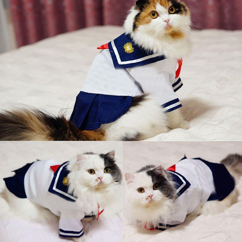 интересные флота летом весной кошка платье