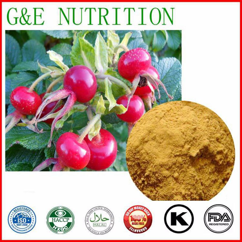 GMP Factory Supply Rosehip Extracts  powder  10:1  1000g<br><br>Aliexpress