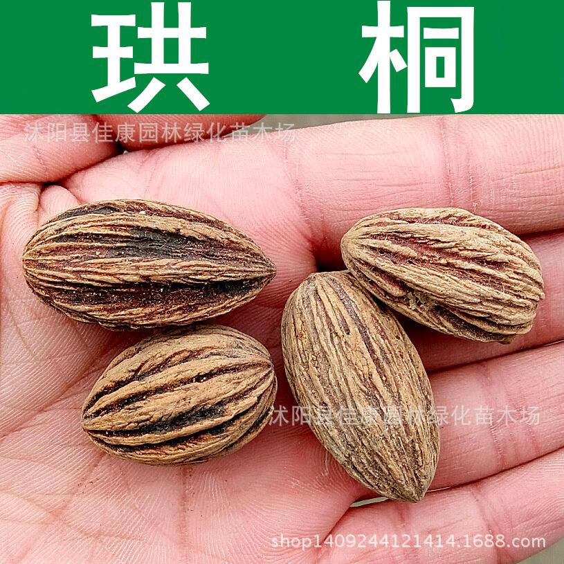 D. involucrata tree seeds freshly collected water pear seed seeds dove dove tree blooms rare plants 200g / Pack(China (Mainland))