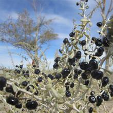 wholesale black wolfberry Medlar healthy berries pure goji berry dried fruit 500g best food keeps you