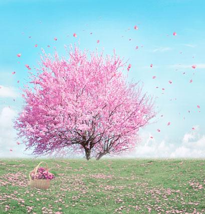 Здесь можно купить  10*20feet(300*600CM) backdrops photography Cherry blossom petals fluttering photo studio backgrounds  Бытовая электроника