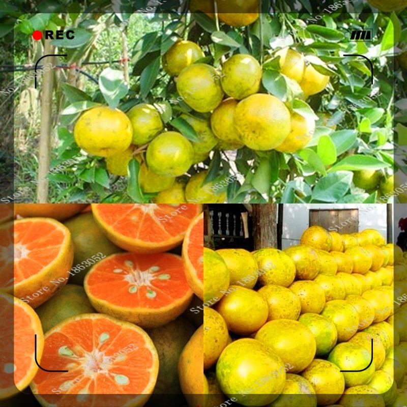 Thailand Fruit Wholesaler Email Mail: Online Kopen Wholesale Thai Vruchten Uit China Thai