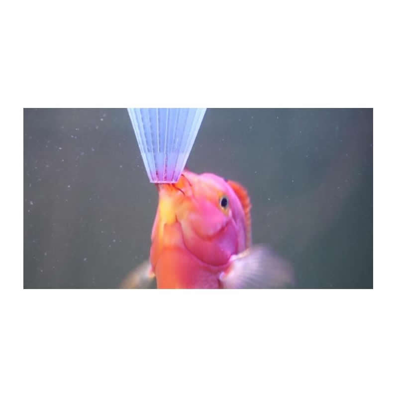Online buy wholesale aquarium discus fish from china for Live feeder fish