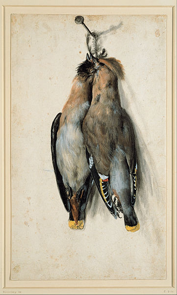 Canvas Art Prints Stretched Framed Giclee World Famous Artist Oil Painting Lucas Cranach Elder Two Dead Bohemian Waxwings