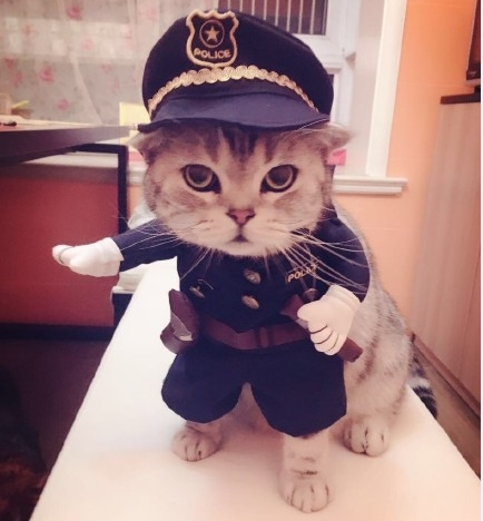 New 2016 whimsy!Good so funny Pet cat dog Dress uniform suit clothes + hat become the police(China (Mainland))