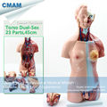 CMAM TORSO10 Bisexual Torso 45cm High 23 Parts Female face with open back Human Anatomical Model