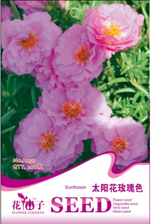 Specials! Rose pink sunflower seeds,Portulaca grandiflora rose,pink peony asparagus,about 200 particles / pack(China (Mainland))