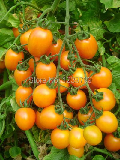 High Quality Free Shipping 100pcs Melon Tomato Seeds sementes vegaetables and fruits sementes frutas casa e jardim with gifts(China (Mainland))