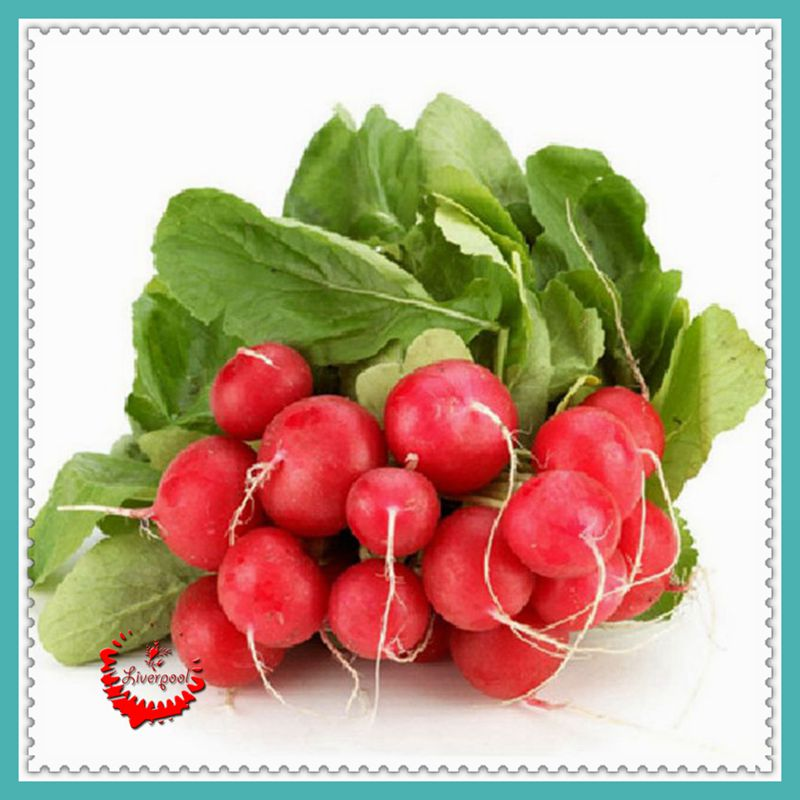 Free Shipping 1 Package 400 Cherry Belle Radish Seeds 100% Real seed Delicious DIY Home Garden Plant(China (Mainland))