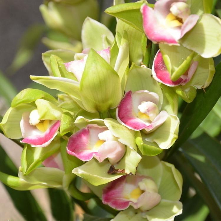 Giardino di orchidee promozione fai spesa di articoli in for Semi orchidea