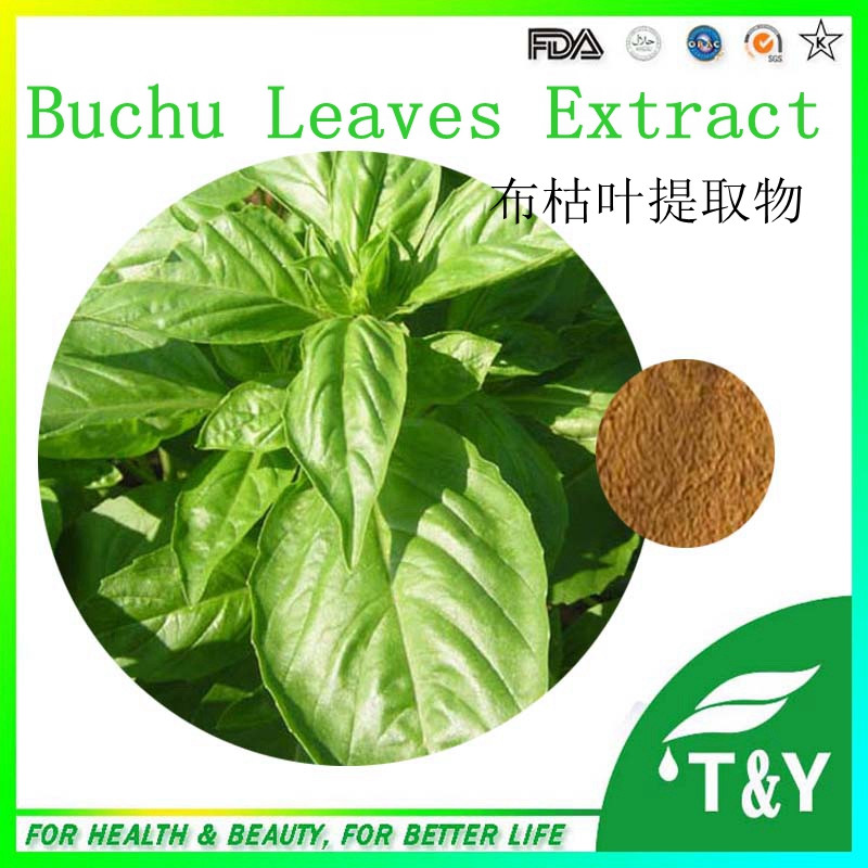High quality Factory Supply Buchu Leaf Extract in store 900g/lot free shipping<br><br>Aliexpress