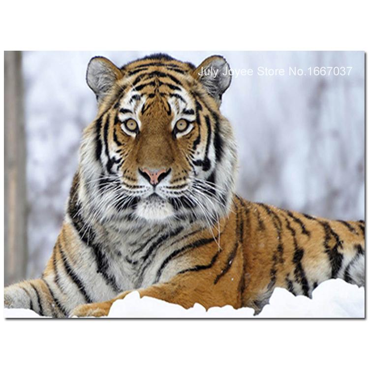 Маньчжурского тигра в снегу