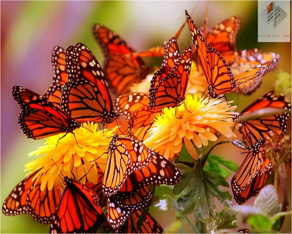 orange butterfly diy diamond painting 40x30cm diy square resinstone diamond embroidery wall decor patchwork unfinish picture