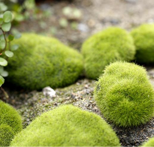 Micro-simulation moss fake rock landscape ecology creative decorative bottle fake rock moss moss lawn(China (Mainland))