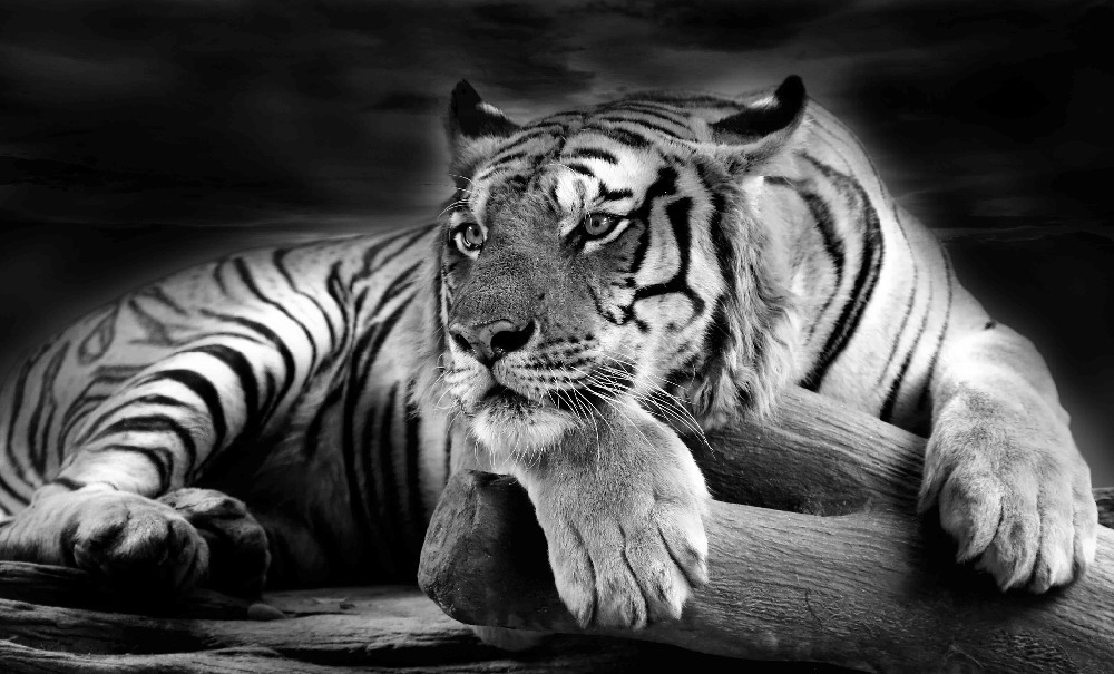 The Truth About White Tigers