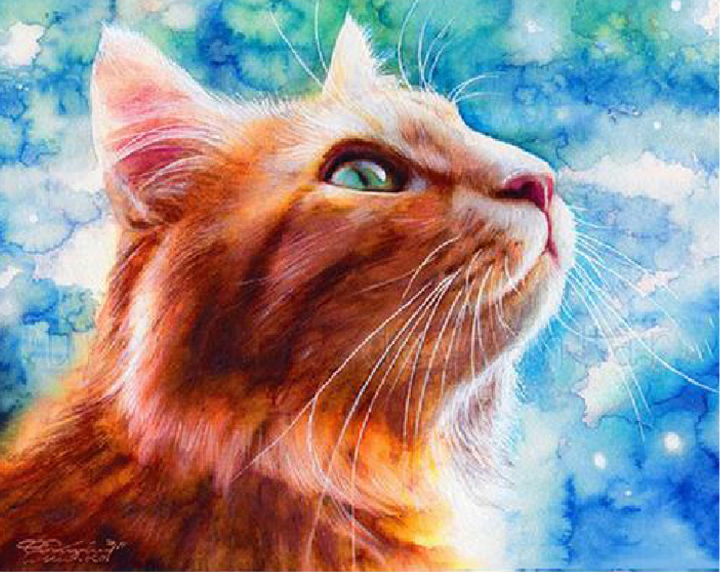 Hot sale Diy diamond Cross Stitch painting brown cat face upward needlework blue sky diamond embroidery home Decoration(China (Mainland))
