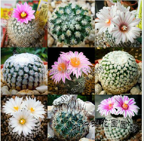 Env O Gratis 20 Unids Mini Cactus Plantas Con Flores