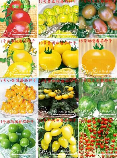100(24 colors) tomato seeds, fruit seeds flower seed garden indoor DIY bonsai POTS planters