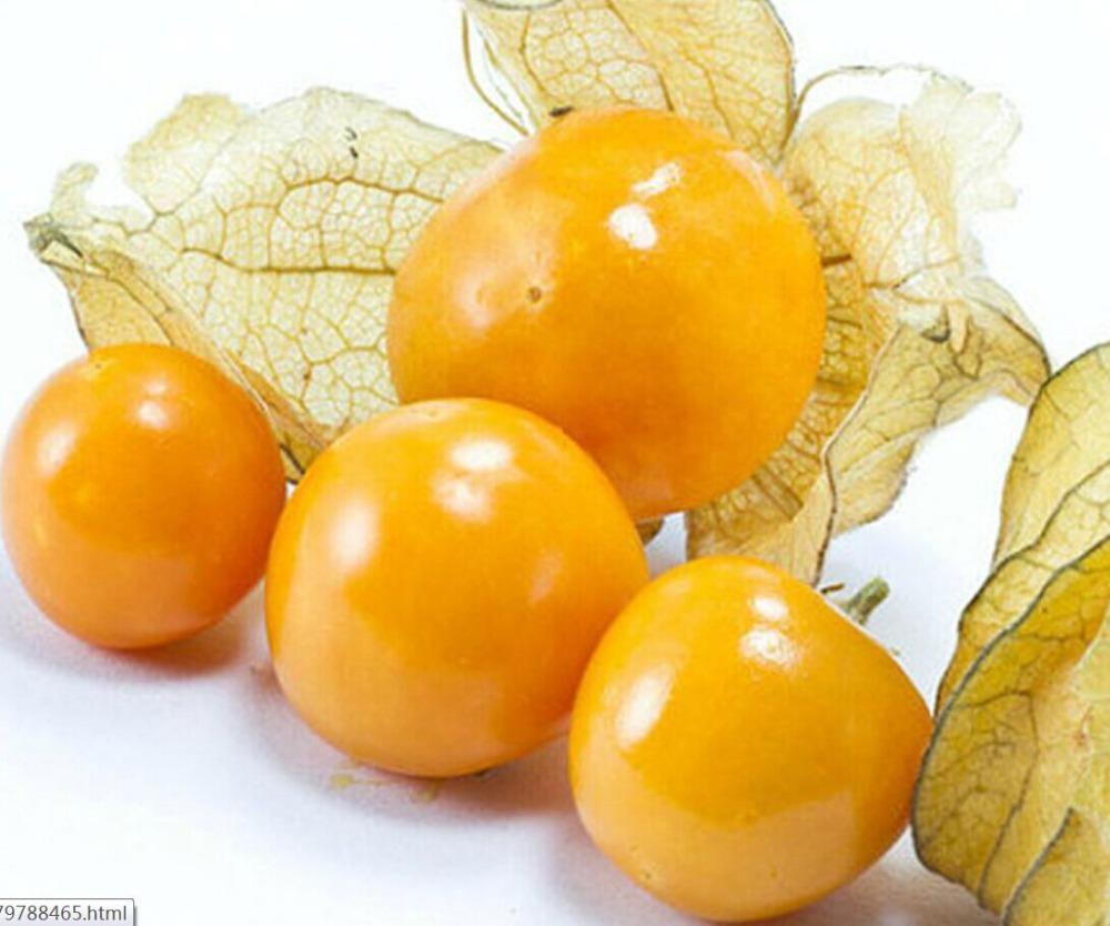 Piña Alquequenjes Mollys Orgánicos de La Herencia Semillas RARE China noreste Cuco fruto(China (Mainland))