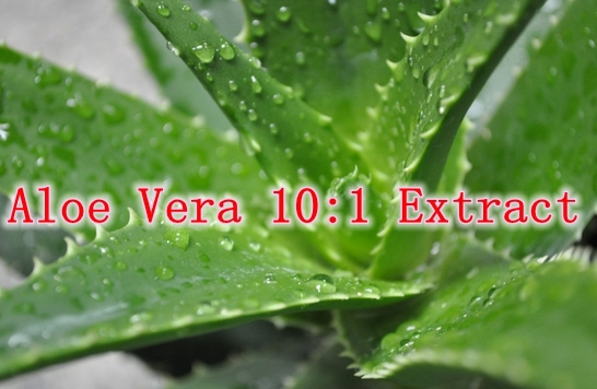 5 Pack High Quality Natural Cosmetics Material Aloe Vera 10:1 Extract 500mg x 500caps free shipping<br><br>Aliexpress